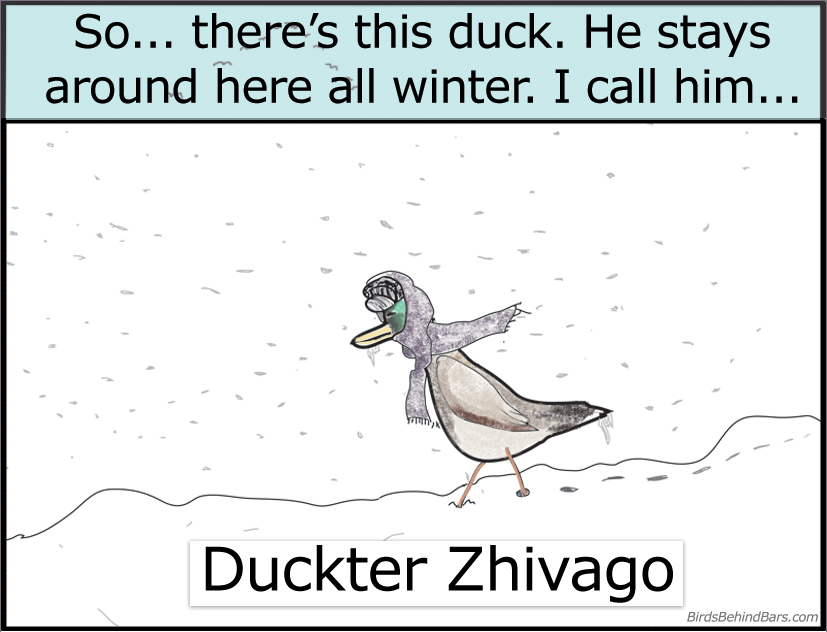 funny duck comic